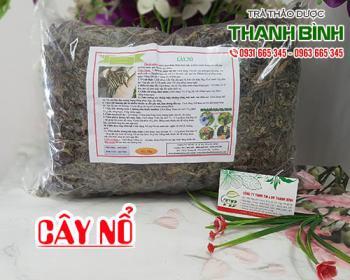 Mua bán cây nổ ở huyện Bình Chánh giúp điều trị da nứt nẻ, mụn nhọt