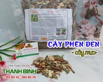 Mua bán cây phèn đen ở quận Tân Phú giúp điều trị đau gai cột sống rất tốt