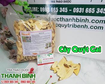 Mua bán cây quýt gai tại TPHCM uy tín chất lượng tốt nhất