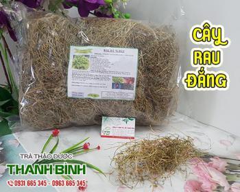 Tác dụng của cây rau đắng trong điều trị sốt cao và rôm sẩy hiệu quả nhất