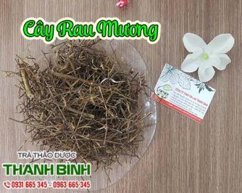 Mua bán cây rau mương tại quận Ba Đình giúp điều trị viêm đau dạ dày hiệu quả