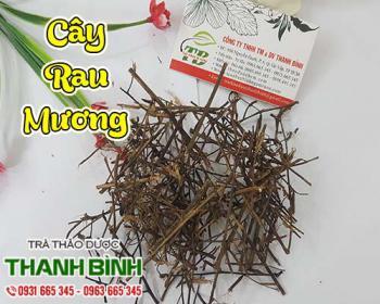Mua bán cây rau mương tại huyện Thanh Oai cải thiện chứng cảm mạo gây sốt