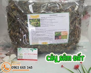 Tác dụng của cây sâm đất trong điều trị nóng trong người hiệu quả nhất