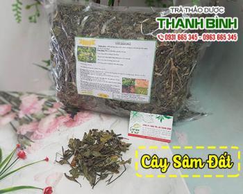 Mua bán cây sâm đất tại TPHCM uy tín chất lượng tốt nhất
