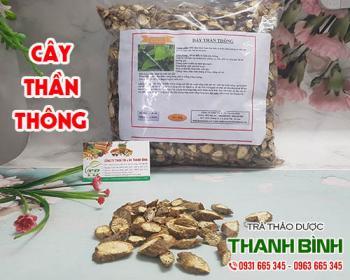 Mua bán cây thần thông ở huyện Bình Chánh giúp tiêu sưng giảm đau các khớp