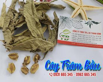 Mua bán cây trâm bầu ở quận Gò Vấp giúp bài trừ giun sán, sán lãi rất tốt