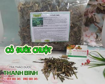 Công dụng hữu ích của cỏ đuôi chuột đối với sức khỏe