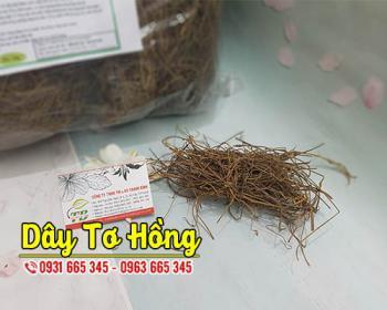 Mua bán dây tơ hồng ở huyện Bình Chánh giúp điều trị chảy máu cam, rôm sảy