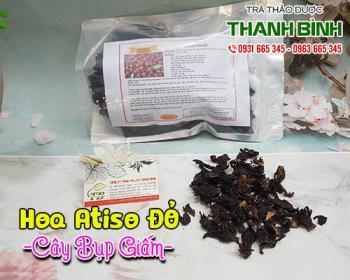 Mua bán cây bụp giấm tại huyện Thạch Thất làm giảm cholesterol trong máu
