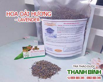 Mua bán hoa oải hương tại TPHCM uy tín chất lượng tốt nhất