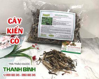 Mua bán cây kiến cò tại TPHCM uy tín chất lượng tốt nhất