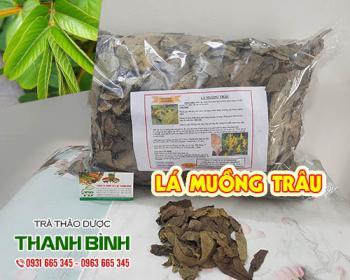 Mua bán lá muồng trâu ở huyện Bình Chánh giúp nhuận tràng lợi tiêu hóa