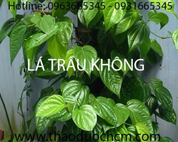 Địa chỉ bán lá trầu không chữa viêm nhiễm phụ khoa tại Hà Nội uy tín nhất