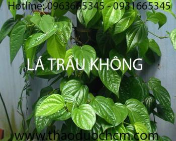Mua bán lá trầu không tại huyện Thanh Oai có tác dụng chữa viêm phế quản