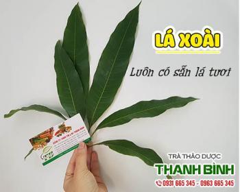 Mua bán lá xoài ở quận Phú Nhuận có tác dụng lợi tiêu hóa, giảm co thắt
