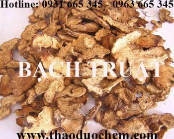 Mua bán củ bạch truật tại huyện Thanh Oai có tác dụng kích thích tiêu hóa