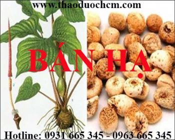 Mua bán bán hạ (củ chóc) tại Tây Ninh hỗ trợ làm giảm đau dạ dày uy tín