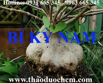 Mua bán cây bí kỳ nam tại huyện Hoài Đức có tác dụng điều trị bong gân