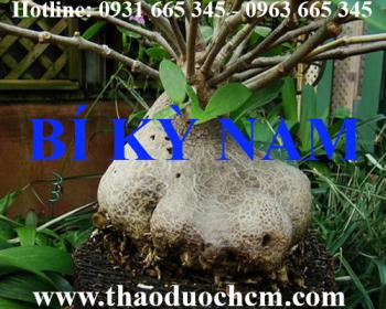 Địa điểm bán cây bí kỳ nam tại Hà Nội giảm đau nhức xương khớp tốt nhất