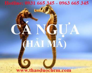 Mua bán cá ngựa (hải mã) tại quận Ba Đình giúp bổ thận tráng dương tốt nhất