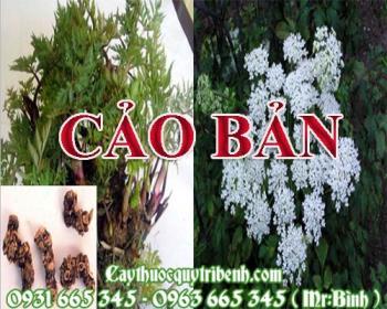 Mua bán cảo bản tại huyện Quốc Oai có tác dụng làm giảm sưng đau nhức