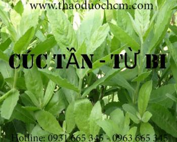 Mua bán cây cúc tần tại Thanh Hóa rất tốt trong việc điều trị bệnh lỵ