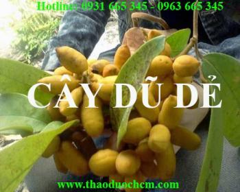 Mua bán cây dũ dẻ tại Thanh Hóa có công dụng chữa mẩn ngứa an toàn