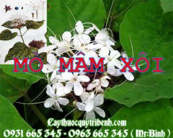 Mua bán cây mò mâm xôi tại huyện Quốc Oai giúp điều trị vết bỏng tốt nhất