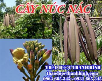 Mua bán cây núc nác tại Thái Bình giúp điều trị ho lâu ngày, khan tiếng
