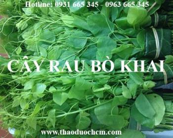Mua bán rau bò khai tại Nam Định rất tốt trong việc trị đái vàng đái rắt