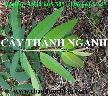 Mua bán cây thành ngạnh tại quận Long Biên có tác dụng trị táo bón