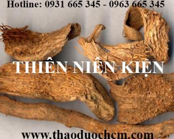 Địa chỉ bán thiên niên kiện điều trị phong tê thấp tại Hà Nội uy tín nhất