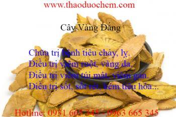 Mua bán cây vàng đắng tại Quảng Ninh hỗ trợ điều trị bệnh tiêu chảy