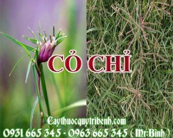 Mua bán cỏ chỉ tại Đà Nẵng rất tốt trong việc điều trị sốt cao ở trẻ em