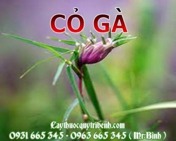 Mua bán cỏ gà tại Long An rất tốt trong việc trị nhiễm trùng sốt rét
