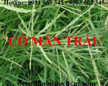 Địa chỉ bán cỏ mần trầu chữa viêm tinh hoàn tại Hà Nội uy tín nhất