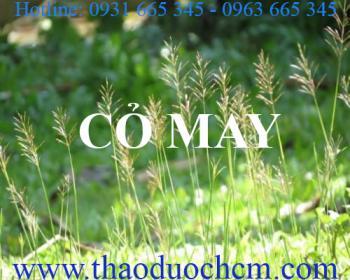 Mua bán cỏ may tại Trà Vinh có công dụng tiêu độc lợi tiểu rất tốt