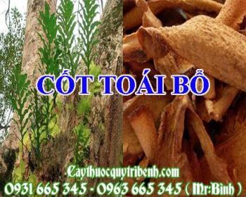 Mua bán cốt toái bổ tại huyện Quốc Oai có tác dụng điều trị đau xương