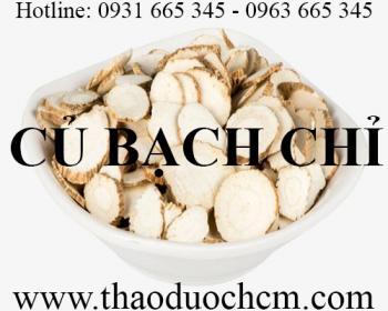 Mua bán củ bạch chỉ tại Sơn La hỗ trợ điều trị đau bụng kinh hiệu quả