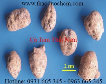 Mua bán củ tam thất nam tại Tây Ninh có tác dụng điều trị đau thắt lưng