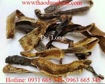 Mua bán địa long uy tín tại Quảng Trị có tác dụng chữa trị hạch lao ở cổ