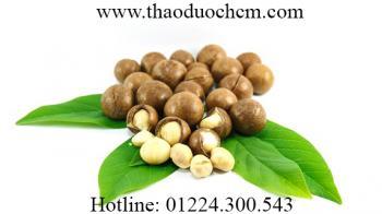 Mua bán hạt mắc ca tại Hà Nội | Hạt mắc ca úc sỉ và lẻ chất lượng
