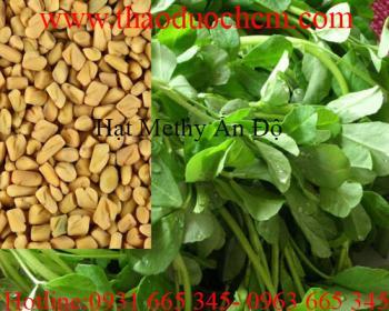 Mua bán hạt methi ấn độ tại Quảng Ninh hỗ trợ tăng cường sức khỏe