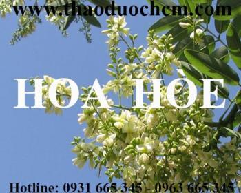 Mua bán hoa hòe tại quận Hoàng Mai giúp điều trị xuất huyết ở phổi