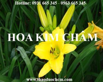 Mua bán hoa kim châm tại Trà Vinh có công dụng mát gan an toàn nhất