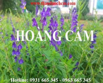 Mua bán hoàng cầm tại Ninh Thuận rất tốt trong việc điều trị kiết lỵ
