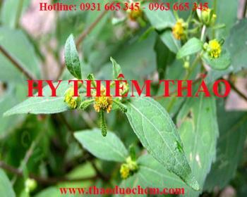 Mua bán hy thiêm thảo tại huyện Sóc Sơn điều trị hạ huyết áp rất tốt