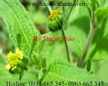 Mua bán hy thiêm thảo tại Ninh Thuận có tác dụng trị  tê bại nửa người