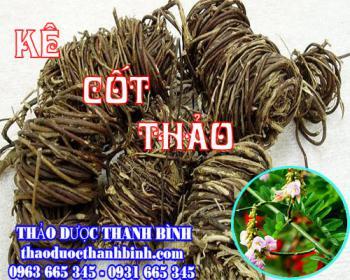 Mua bán kê cốt thảo tại Thái Bình dùng để điều trị ung nhọt, hạch ở cổ