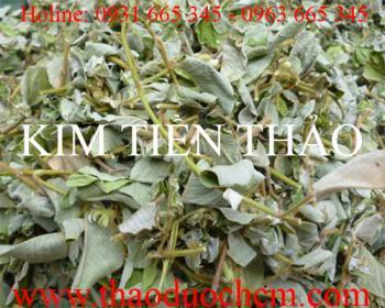 Mua bán kim tiền thảo tại huyện Mê Linh có tác dụng điều trị viêm túi mật